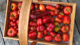 Min bästa hemodlade tomatsås